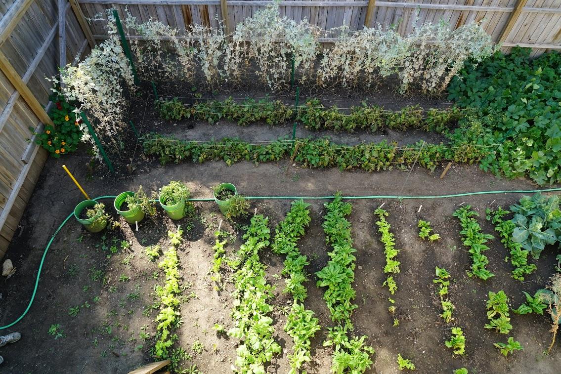 Big Garden 4